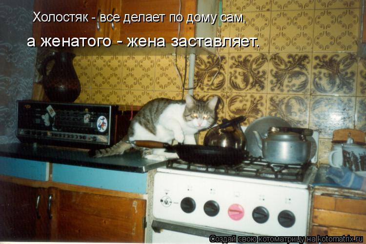 Котоматрица: Холостяк - все делает по дому сам,  а женатого - жена заставляет.