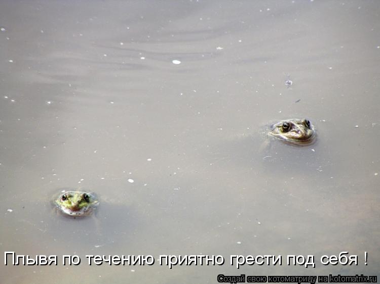 Котоматрица: Плывя по течению приятно грести под себя !