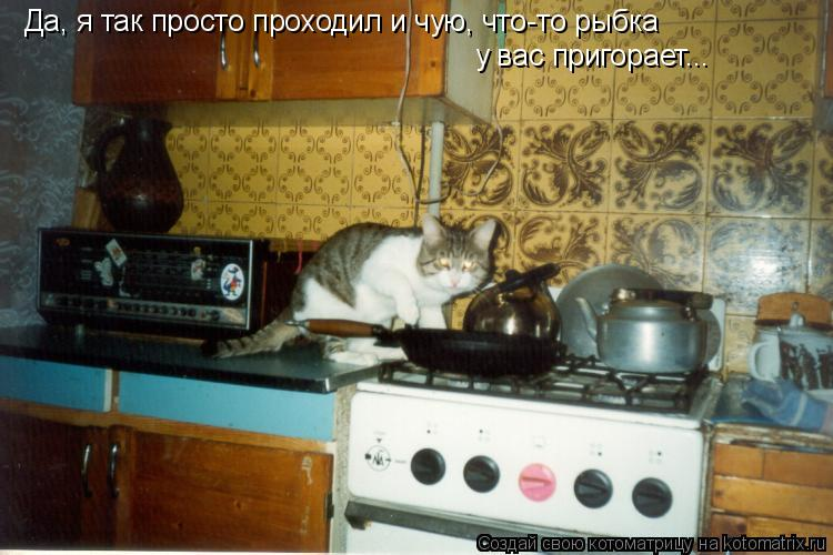 Котоматрица: Да, я так просто проходил и чую, что-то рыбка  у вас пригорает...