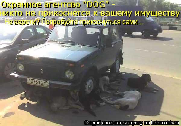 """Котоматрица: Охранное агентсво """"DOG"""" -  никто не прикоснется к вашему имуществу Не верети? Попробуйте прикоснуться сами..."""