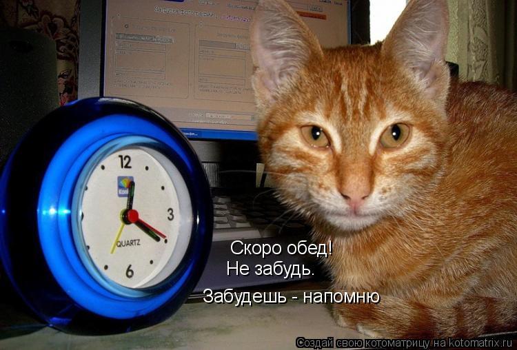 Котоматрица: Скоро обед! Не забудь. Забудешь - напомню