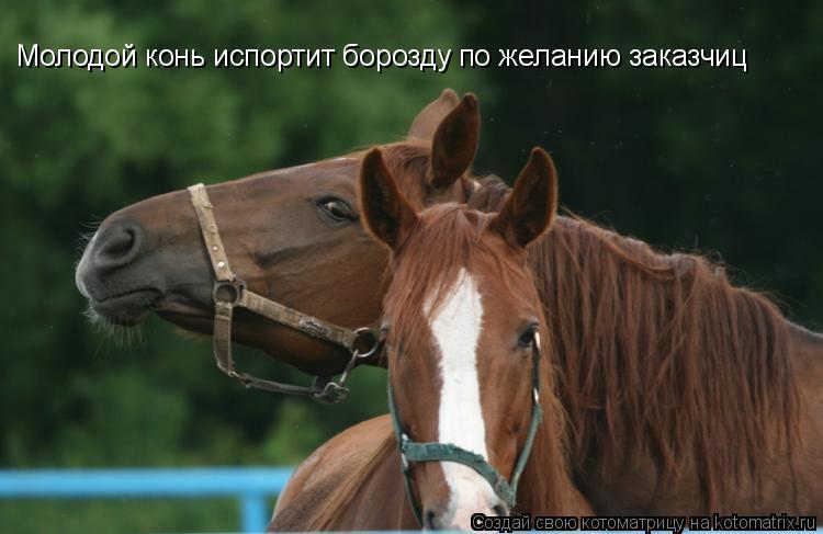 Котоматрица: Молодой конь испортит борозду по желанию заказчиц