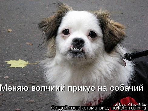 Котоматрица: Меняю волчиий прикус на собачий