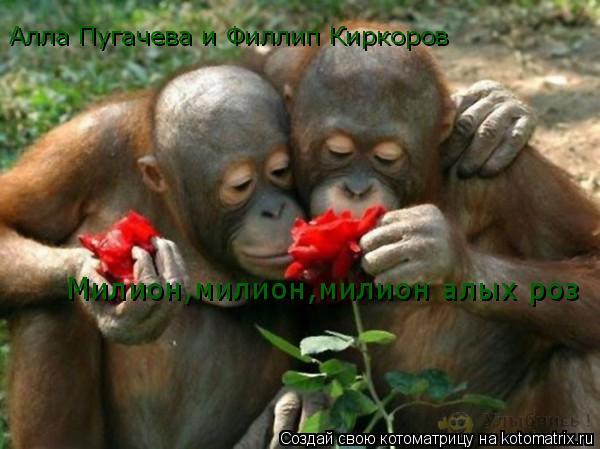 Котоматрица: Алла Пугачева и Филлип Киркоров Милион,милион,милион алых роз
