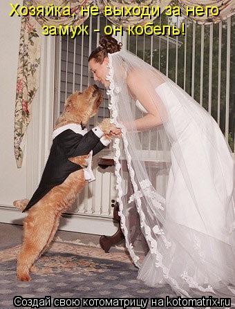 Котоматрица: Хозяйка, не выходи за него  замуж - он кобель!