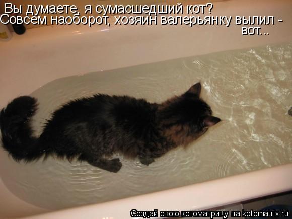 Котоматрица: Вы думаете, я сумасшедший кот? Совсем наоборот, хозяин валерьянку вылил - вот...