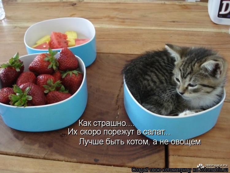 Котоматрица: Как страшно.... Лучше быть котом, а не овощем Их скоро порежут в салат...