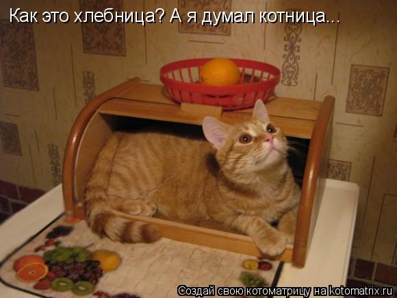 Котоматрица: Как это хлебница? А я думал котница...
