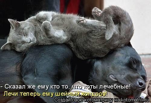 Котоматрица: - Сказал же ему кто то, что коты лечебные! Лечи теперь ему шейный хондроз!