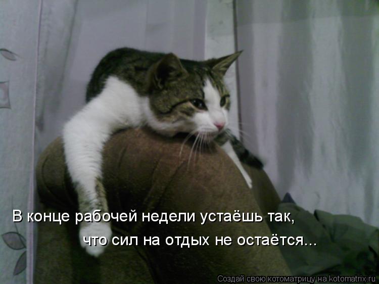 Котоматрица: В конце рабочей недели устаёшь так, что сил на отдых не остаётся...