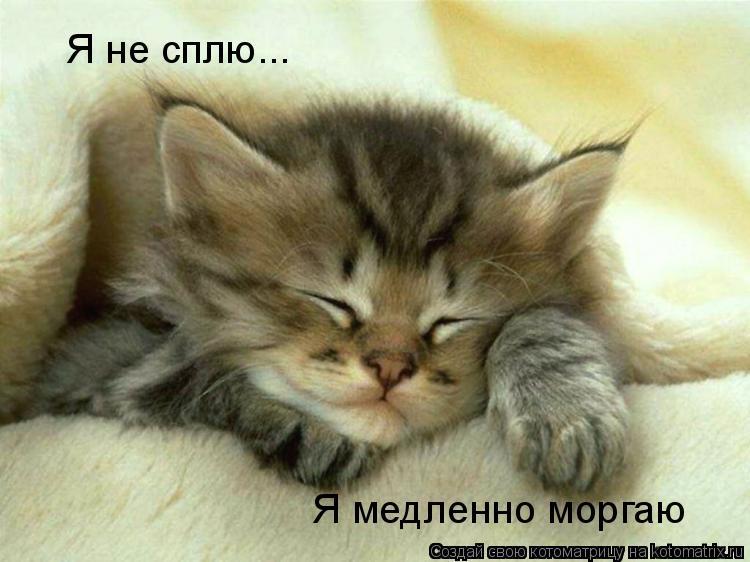 Котоматрица: Я не сплю... Я медленно моргаю