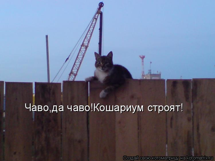 Котоматрица: Чаво,да чаво!Кошариум строят!