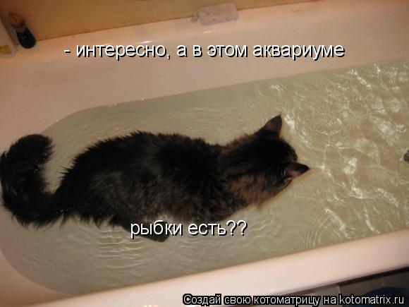 Сонник топить котят
