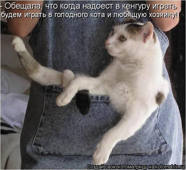 Котоматрица: - Обещала, что когда надоест в кенгуру играть будем играть в голодного кота и любящую хозяйку!!
