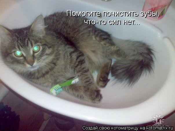 Котоматрица: Помогите почистить зубы, что-то сил нет...