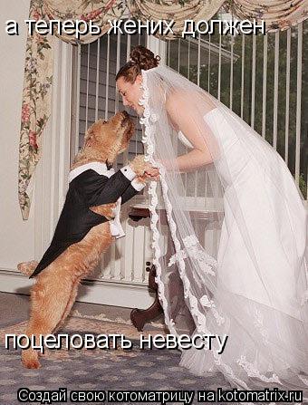 Котоматрица: а теперь жених должен а теперь жених должен поцеловать невесту
