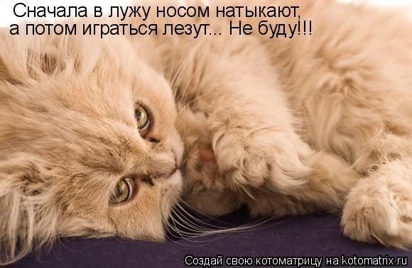 Котоматрица: Сначала в лужу носом натыкают, а потом играться лезут... Не буду!!!