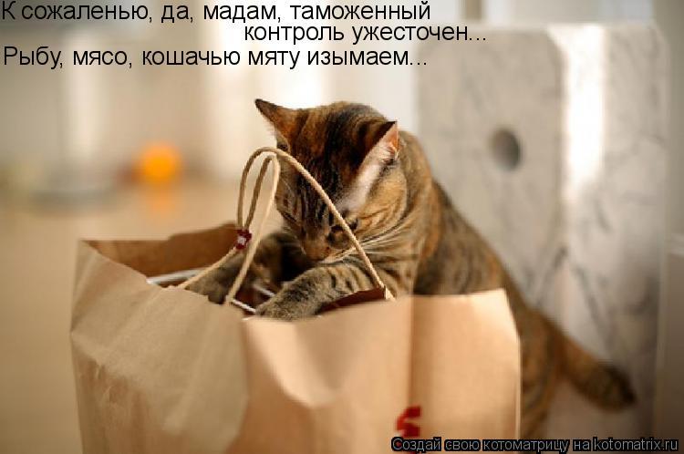 Котоматрица: К сожаленью, да, мадам, таможенный  контроль ужесточен... Рыбу, мясо, кошачью мяту изымаем...