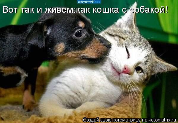 Котоматрица: Вот так и живем:как кошка с собакой!