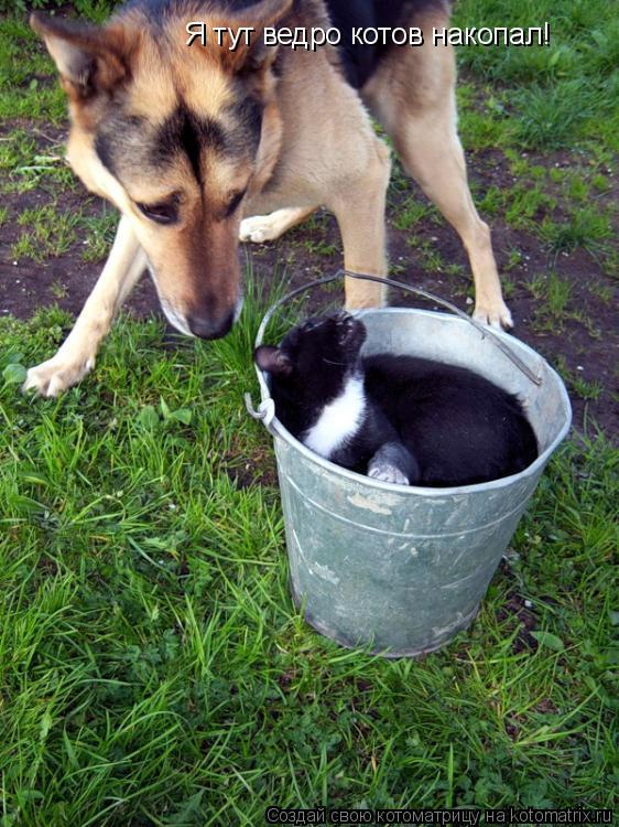 Котоматрица: Я тут ведро котов накопал!