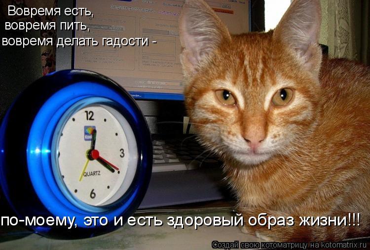 Котоматрица: Вовремя есть, вовремя пить, вовремя делать гадости -  по-моему, это и есть здоровый образ жизни!!!