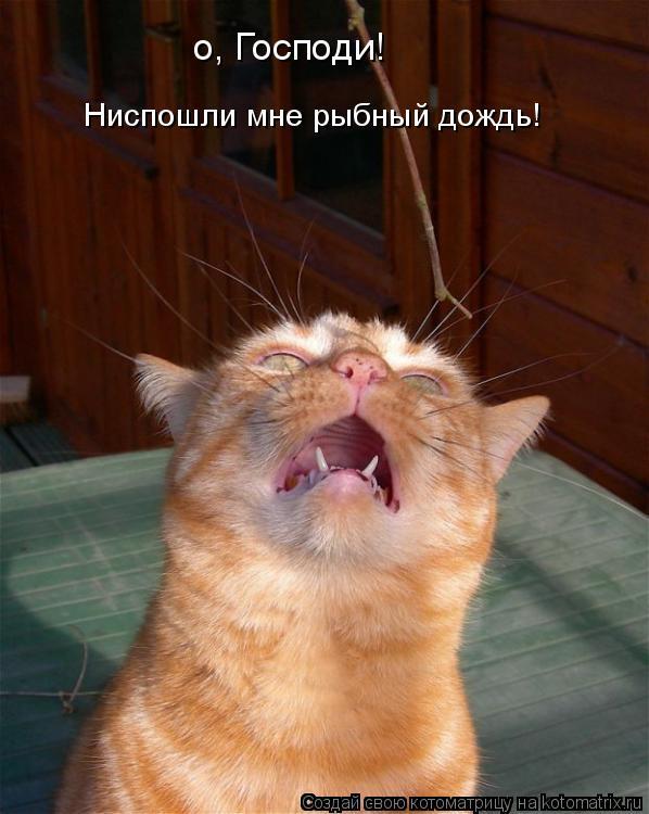 Котоматрица: о, Господи! Ниспошли мне рыбный дождь!