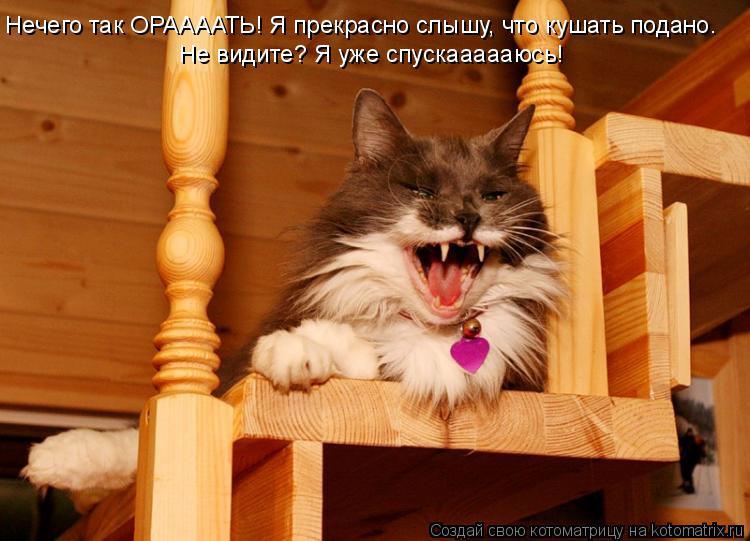 Котоматрица: Нечего так ОРААААТЬ! Я прекрасно слышу, что кушать подано. Не видите? Я уже спускаааааюсь!