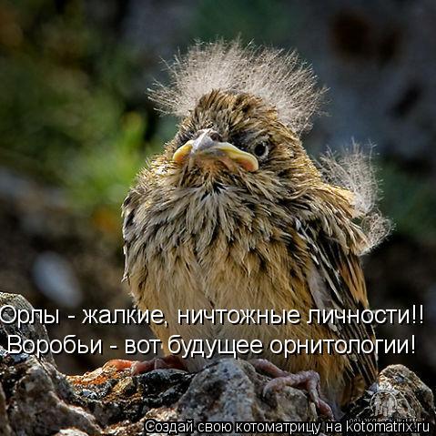 Котоматрица: Орлы - жалкие, ничтожные личности!!  Воробьи - вот будущее орнитологии!