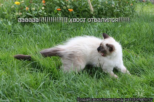 Котоматрица: аааааа!!!!!!!!!!!!!!! хвост отвалился!!!!!!