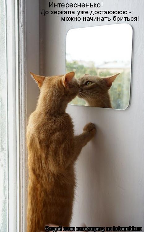 Котоматрица: Интересненько! До зеркала уже достаюююю -  можно начинать бриться!
