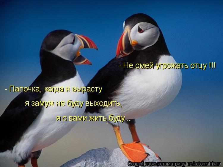 Котоматрица: - Папочка, когда я вырасту я замуж не буду выходить, я с вами жить буду... - Не смей угрожать отцу !!!