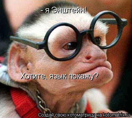 Котоматрица: - я Энштейн!  Хотите, язык покажу?