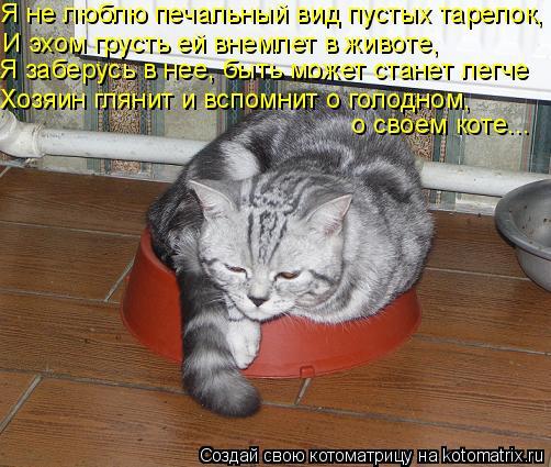 Котоматрица: Я не люблю печальный вид пустых тарелок, И эхом грусть ей внемлет в животе, Я заберусь в нее, быть может станет легче Хозяин глянит и вспомни