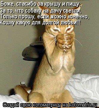 Котоматрица: Боже, спасибо за крышу и пищу, За то, что собаку на дачу свезли, Только прошу, если можно конечно, Кошку какую для долгой любви!!!