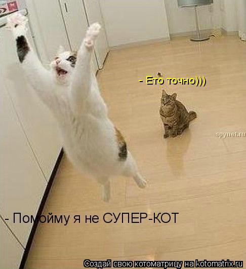 Котоматрица: - Помойму я не СУПЕР-КОТ - Ето точно)))