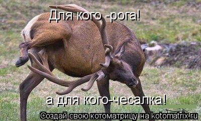Котоматрица: Для кого -рога! а для кого-чесалка!