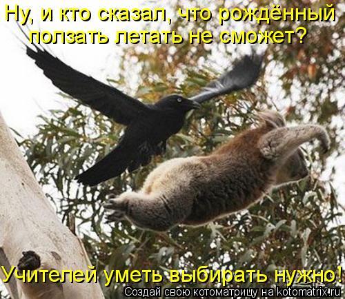 Котоматрица: Ну, и кто сказал, что рождённый ползать летать не сможет? Учителей уметь выбирать нужно!
