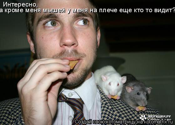 Котоматрица: Интересно,  а кроме меня мышей у меня на плече еще кто то видит?