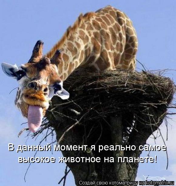Котоматрица: В данный момент я реально самое высокое животное на планете!
