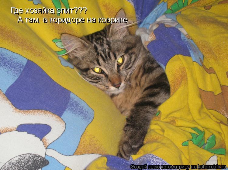 Котоматрица: Где хозяйка спит??? А там, в коридоре на коврике...