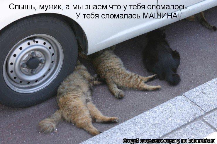 Котоматрица: Слышь, мужик, а мы знаем что у тебя сломалось... У тебя сломалась МАШИНА!