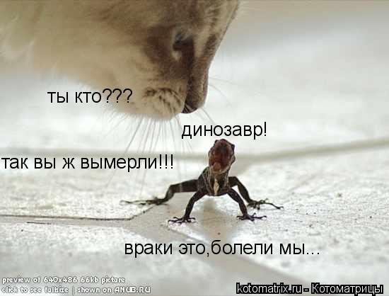 Котоматрица: ты кто??? так вы ж вымерли!!! динозавр! враки это,болели мы...