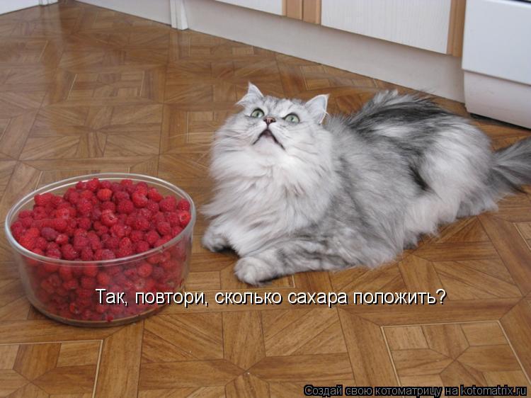 Котоматрица: Так, повтори, сколько сахара положить?