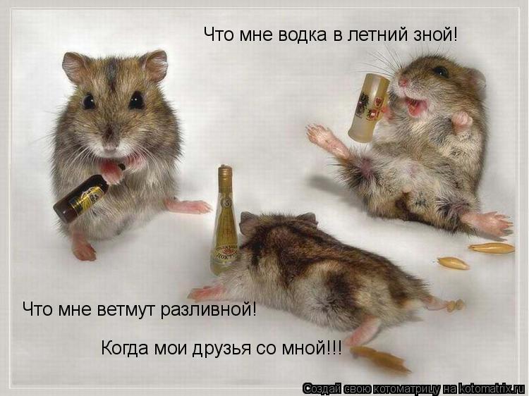 Котоматрица: Что мне водка в летний зной! Что мне ветмут разливной! Когда мои друзья со мной!!!