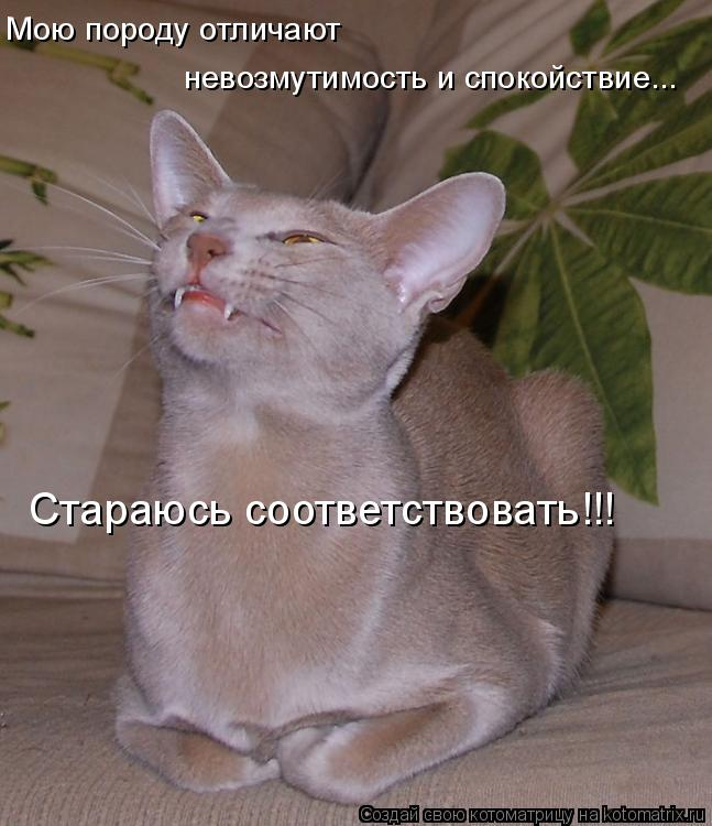 http://kotomatrix.ru/images/lolz/2008/09/03/K4.jpg