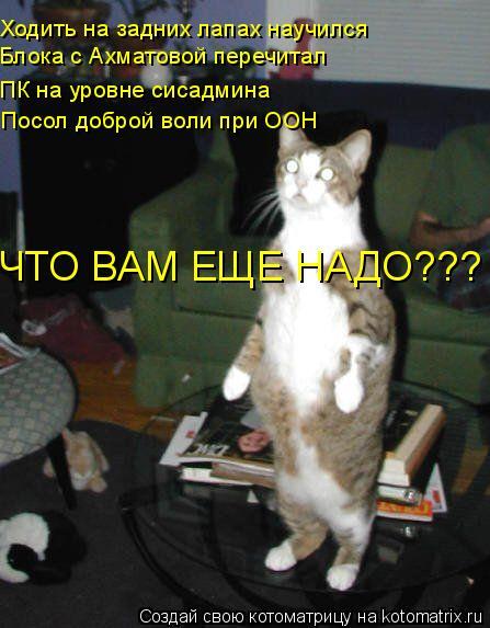 Котоматрица: Ходить на задних лапах научился Блока с Ахматовой перечитал ПК на уровне сисадмина ЧТО ВАМ ЕЩЕ НАДО??? Посол доброй воли при ООН