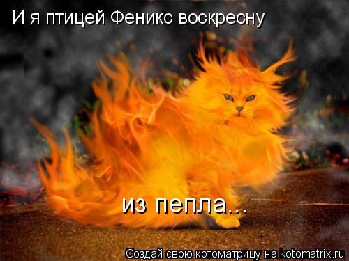 Котоматрица: И я птицей Феникс воскресну из пепла...