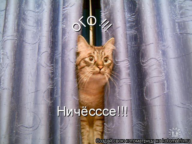 Котоматрица: О Г О !!! Ничёсссе!!!