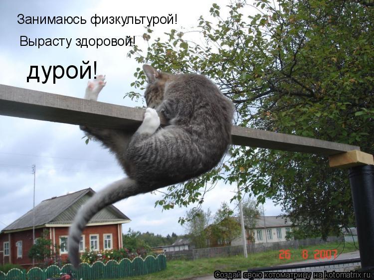 Котоматрица: Занимаюсь физкультурой! Вырасту здоровой! дурой!