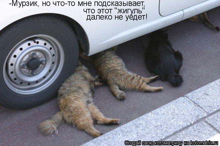 """Котоматрица: -Мурзик, но что-то мне подсказывает, что этот """"жигуль"""" далеко не уедет!"""